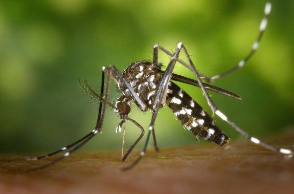 Pinturas anti mosquitos 1